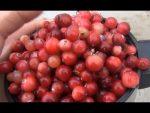 Клюква: все о пользе ягоды, рецепты и противопоказания