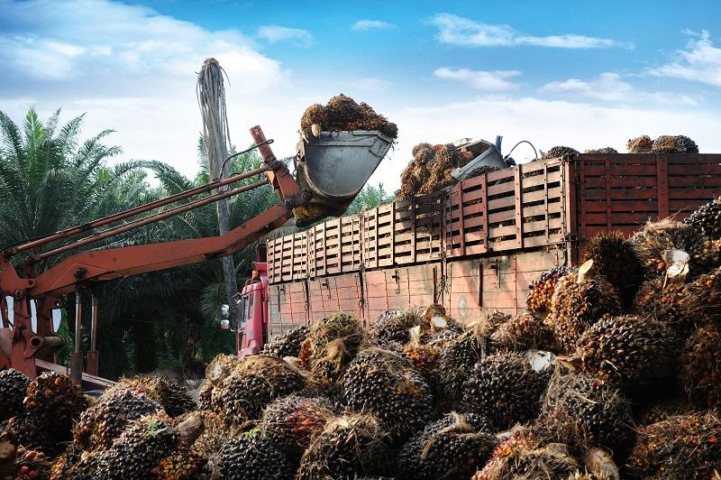 пальмовое масло его вред